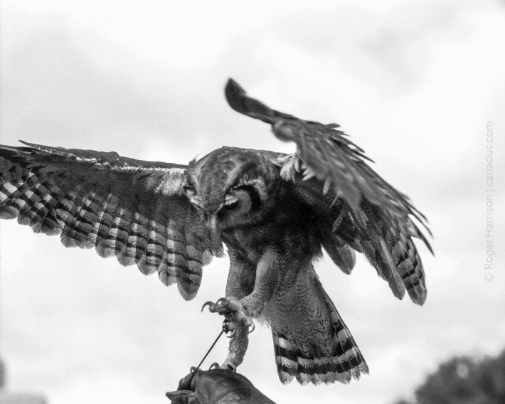 Almost taking flight G1, 90mm, FP4+